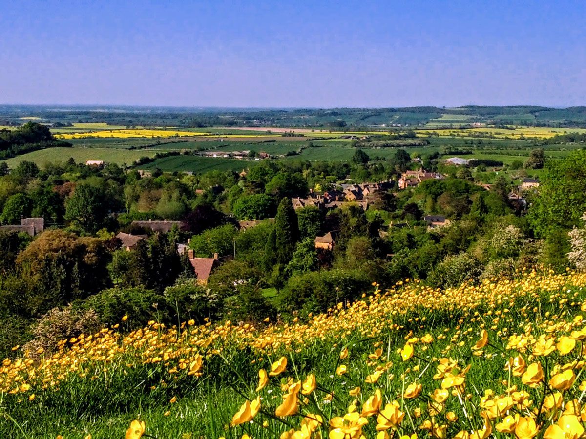 ilmington village view in buttercups